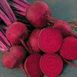Search : Beet Red Ace Hybrid - Park Seed Beet Seeds