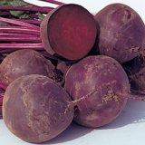 Search : Beet Boro Hybrid Organic - Park Seed Organic Seeds